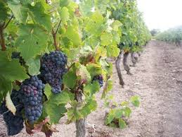 courtier en vins