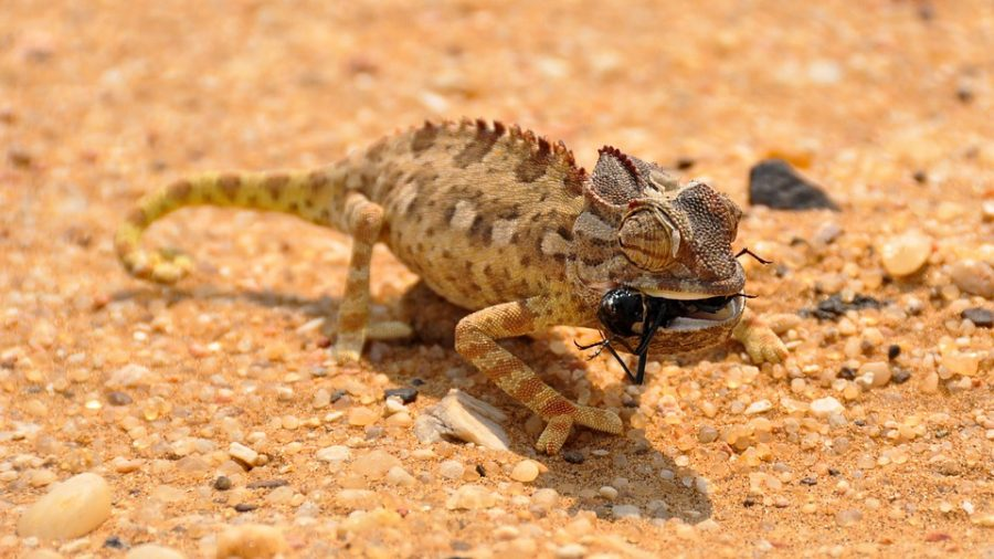 Un voyage en Namibie