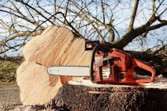 Élaguer un arbre : voici les astuces et conseils